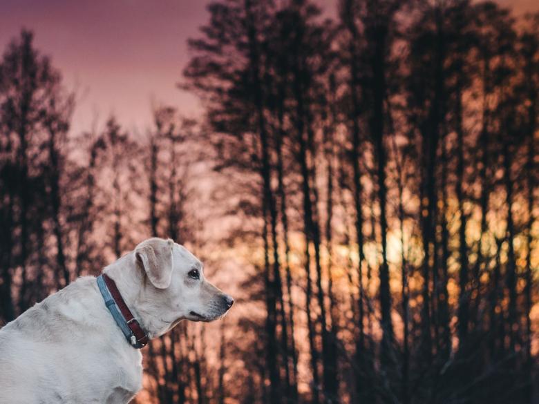 Kontemplując zachód słońca
